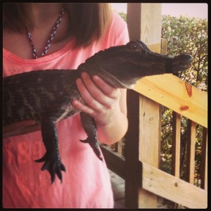 Alligator in Cocoa Beach 040213