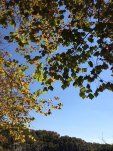 treeleavesFrancePark092814