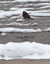 BirdMarch